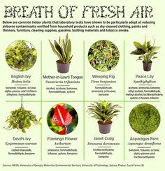 Houseplants that clean the air in your home or office.