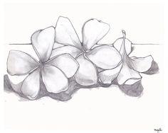 Single Plumeria Pencil Drawing Fine Art Flower by GreenBomb, $20.00