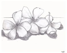 how to draw a frangipani flower step by step