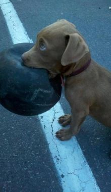 Man, I broke it! Get this pooch a new toy that he can really rip into from Glad…