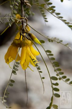 Out & About: Spring Flowers Spring Flowers, Flora, Landscape, Nature, Plants, Naturaleza, Plant, Landscaping, Off Grid