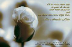 Alan A. Milne - Se tu vivrai cento anni io spero di viverne [..]  #AlanAlexanderMilne, #amore, #liosite, #citazioniItaliane, #frasibelle, #ItalianQuotes, #Sensodellavita, #perledisaggezza, #perledacondividere, #GraphTag, #ImmaginiParlanti, #citazionifotografiche,