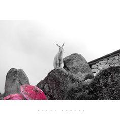 Now I've finally woken up to the beauty of the world through a love song  Through a love song that i heard from the rivers and the birds  #blackandwhite #series #freedom #Escape #Wanderlust #Travel #Lyrics #KlakTik #Song #Landscape #Triund #HimachalPradesh #Himachal #Hills #India #VSCOcam #vsco #InstaSize #Trek #Pink #Umbrella #Goat #Rock
