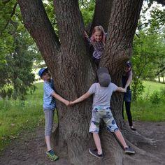 Puunhalausviikko kannustaa ihmisiä halaamaan puita ja osoittamaan, että he arvostavat omaa lähiympäristöään. Puunhalausviikkoa vietetään 21.-27.8.2017.Teemaviikko on osa myös 26.8. vietettävänSuomen luonnon päiväntapahtumia. Puut ovat maapallon pitkäikäisimpiä olentoja. Kotimaisista puulajeista pitkäikäisiä ovat esimerkiksi männyt, katajat, marjakuuset, lehtikuuset ja tammet. Suomen vanhimman puun arvellaan olevan Lapissa kasvavan 800-vuotiaan männyn.