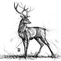 Wonderful Pictures deer drawing sketches Thoughts What's the actual difference between sketching along with illustrating? To help response to this particular conundrum Animal Sketches, Art Drawings Sketches, Animal Drawings, Realistic Drawings, Easy Drawings, Deer Drawing, Painting & Drawing, Drawing Drawing, Drawing Tips