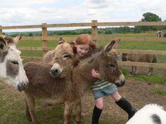 donkeys | healthy, happy, friendly ponies and mini donkeys