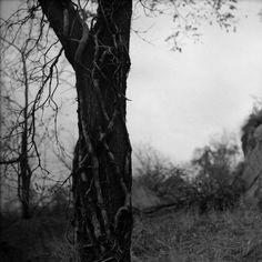 Катя Чаушева - 228 фото. Фотографии Борис Литвинов.