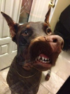 Funny Dog with Braces