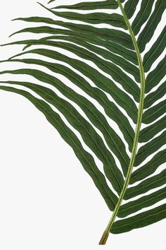 Plant Leaves, Plants, 2016 Calendar, Plant, Planets