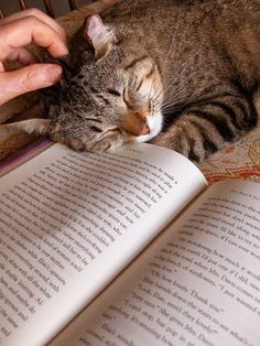 Happiness is a purring cat to pet and a good book to read.