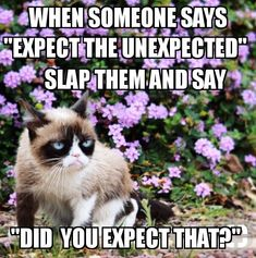 5 Powerful Clever Tips: Grumpy Cat Morning cat room bathroom.Grumpy Cat New Year. Grumpy Cat Quotes, Funny Grumpy Cat Memes, Funny Animal Jokes, Cat Jokes, Cute Funny Animals, Funny Cats, Funny Cat Quotes, Really Funny Memes, Cute Memes