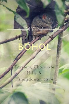 My 72 hours in Bohol, Philippines - tarsiers, Chocolate Hills and Hinagdanan cave