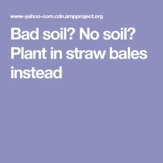Bad soil? No soil? Plant in straw bales instead