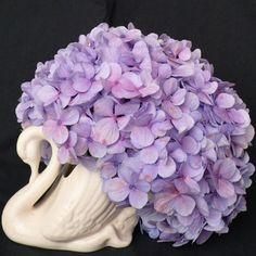 A New Zealand icon, the Crown Lynn Swan.I think most nz houses had one of these while I was growing up. Hydrangea Not Blooming, Hydrangea Flower, Flowers, White Hydrangeas, Lavender Green, Lilac, Blue Green, Long White Cloud, Purple Rooms