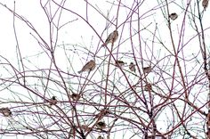 Moscow: the winter by Graziella Serra Art & Photo on Moscow, Photo Art, Creatures, Birds, Winter, Plants, Winter Time, Bird, Flora