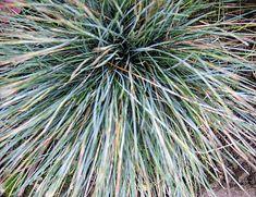Afbeeldingsresultaat voor gras in plantenbak