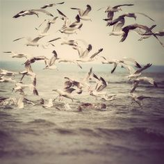 Bird photograph Seagulls in flight over by EyePoetryPhotography, $30.00
