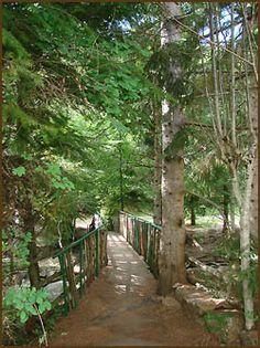 LE TERONDEL camping mythique de l'Aigoual, créé dans les années 1970 par André BASTIDE, Artiste, Poète, Mineur et entrepreneur Cévenol, plantant avec sa famille chacun des arbres, de ce magnifique Arboretum....