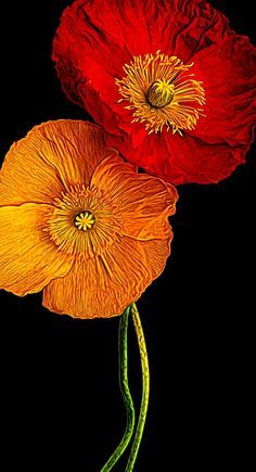 Two poppies by Lee Wilkerson