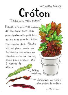 Garden Plants, Indoor Plants, House Plants, Wonderful Flowers, All Flowers, Botanical Prints, Botanical Gardens, Plant Illustration, Cactus Y Suculentas