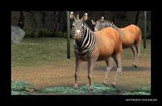 Bildergebnis für zoo resort 3d tiere