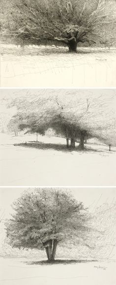 mary sprague - Trees