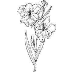 ef94c0922e568 gladiolus Gladiolas Tattoo, Gladiolus Flower Tattoos, Birth Flower Tattoos,  Tribute Tattoos, 3d