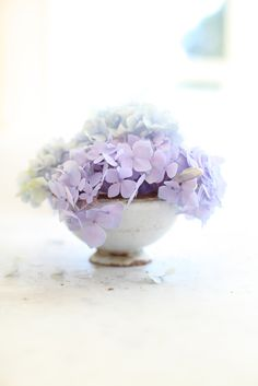 hydrangeas. when I have a home of my own I will have hydrangea bushes. and peonies. got to have peonies too.