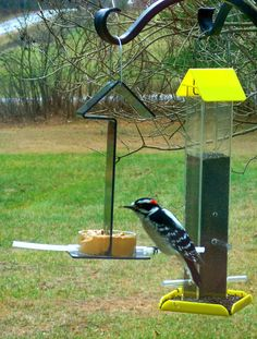 Peter's Feeders Pb-31 Peanut Butter Feeder: Give Your Birds A Healthy And…