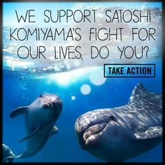 The Cove activist Satoshi Komiyama has been working tirelessly to save Taiji's dolphins. His fearlessness is such an inspiration!   Feel the same? Send him a message of support.