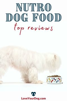 Thinking of introducing your dog to one of Nutro's dog food lines? We break down Nutro Wholesome Essentials, Nutro Ultra and Nutro Limited Ingredient in this food review. #loveyourdog #dogfoodreview #nutrodogfood Nutro Dog Food, Dog Food Reviews, Grain Free Dog Food, Best Puppies, R Dogs, Healthy Choices, How To Introduce Yourself, Your Dog, Essentials