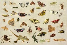 A Study Of Insects Painting by Jan Van Kessel