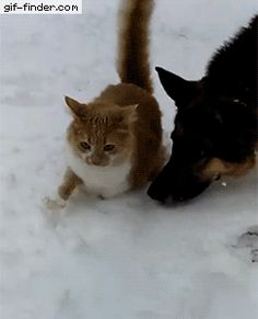 These cat and dog are playing in snow... https://i.pinimg.com/originals/19/3e/83/193e83815e98c7b43fe1f8d53a336467.gif