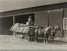 Farm wagons were all-purpose horse-drawn vehicles that could carry crops from the field to the barn or to market. This model -- with an open body and no driver's seat -- was simple, but handy. It readily hauled this load of bagged seed or grain. Old Photos, Vintage Photos, Pictures Of America, Farm Boys, Vintage Farm, Horse Drawn, Old Barns, Horse Farms, Old Things