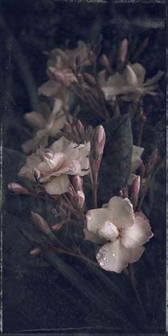 "Flowers in Neutral Moment-2014 ""Nerium oleander"" Archival pigment print Photo by Soichi Oshika"