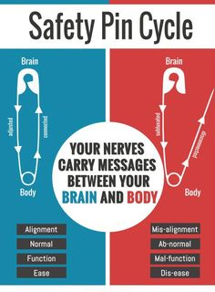 How/why Chiropractic Works!  A simple diagram explaining the connection between your brain and the rest of your body. #Chiropractic Safety Pin diagram