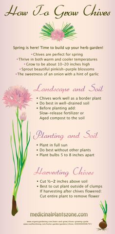 Learn how to grow chives and build the perfect spring garden. Chives are a wonderful medicinal herb that should be in everyone's herb garden. Herb Garden, Vegetable Garden, Plant Zones, Spring Is Here, Medicinal Plants, Planting Seeds, Lawn Care, Spring Garden, Horticulture