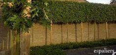 1000 images about arbres paliss s en espalier ou rideau on pinterest hedges garden design. Black Bedroom Furniture Sets. Home Design Ideas