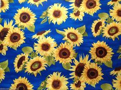 Spaced Sunflowers Cotton Fabric Gold Yellow Flowers Large Floral Blue per Metre