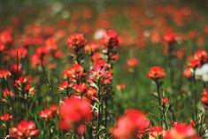 Growing Wild | Free People Blog #freepeople