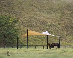 Shade Sail shelter for horses … Horse Paddock, Horse Stables, Horse Barns, Horse Shelter, Animal Shelter, Field Shelters, Landscape Arquitecture, Horse Fencing, Horse Property