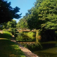 It's gorgeous outside. Just been for a long #morningwalk  along the #riverwey.