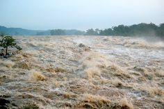 For IAES: It is well known that deforestation and agriculture increase the loss of soil — but by how much? Geologists studying rivers in the Southeast have found that because of human activity, soil is eroding 100 times faster today than in the late 1800s. New soil is not created quickly enough to replace what is being lost, the authors reported in the journal Geology.