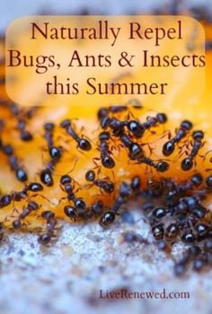 Great ideas! Naturally Repel Bugs, Ants & Insects This Summer at LiveRenewed.com