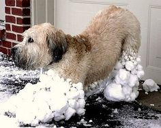 Snow day!! Exactly the Reason for Willow's SnowSuit... Millions of attachable Snowballs