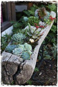 Διακόσμηση Κήπου: Ιδέες για συνθέσεις από παχύφυτα | Woody's Ξύλινες Χειροποίητες Κατασκευές & Διακόσμηση Κήπου