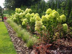 Moja codzienność - ogród Oli - strona 267 - Forum ogrodnicze - Ogrodowisko