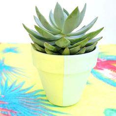 Saturday succulent..