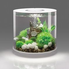 This 4 Gallon Tube 15 LED Aquarium Tank offers an unobstructed, view of its underwater world. This exquisite 4 Gallon Tube 15 LED Aquarium Tank is designed with cylindrical contouring. This tub Led Aquarium, Acrylic Aquarium, Betta Aquarium, Aquarium Stand, Betta Fish Tank, Fish Tanks, Aquarium Ideas, Snake Tanks, Fish Aquariums