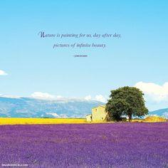 16 Best Lavender Quotes images   Lavender quotes, Colors